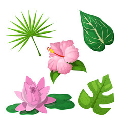 Tropical flowers and leaves for decoration vector