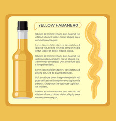 yellow habanero spicy sauce in transparent bottle vector image