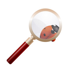 magnifying glass ladybird education concept vector image