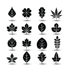 Leaf icon2 vector