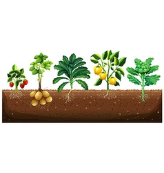 Many kinds of vegetables planting on ground vector