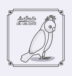 australia gang-gang cockatoo frame in monochrome vector image