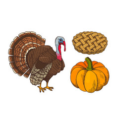 pumpkin and turkey baked pie icons set vector image
