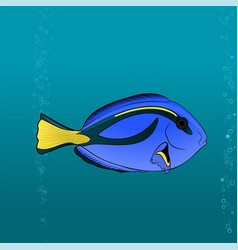 Regal blue tang cartoon pic vector