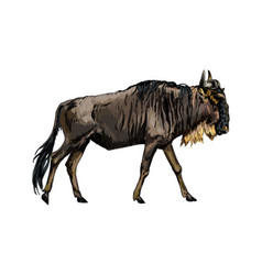 wildebeest from a splash watercolor colored vector image