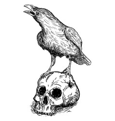 Black common raven bird standing on human skull vector