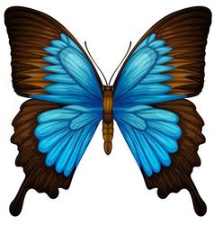 Blue mountain swallowtail vector