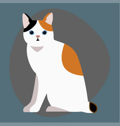 Cat breed cute pet portrait fluffy white black red vector