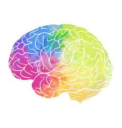 Human brain with rainbow watercolor spray on a vector