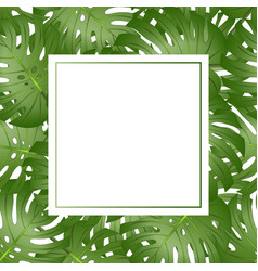 Philodendron monstera leaf banner card copy space vector