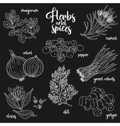 Spices and herbs set Contour on dark vector