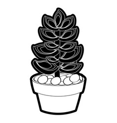 Succulent in the potted vector