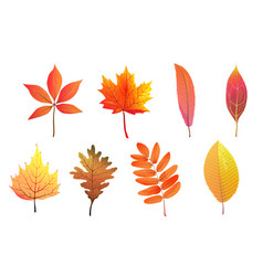 autumn foliage hand drawn colorful leaves flat vector image