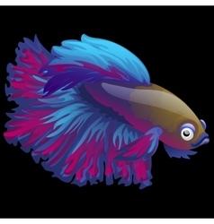 Blue fish cockerel closeup on a black background vector