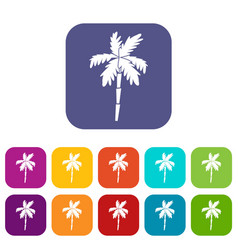 Palm tree icons set vector
