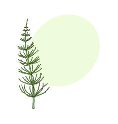 beautiful elegant hand drawn equisetum horsetail vector image