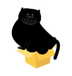 Fat cat in small box isolated home pet in vector