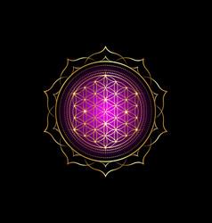 Flower life yantra mandala sacred geometry vector