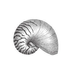 Nautilus shell dotwork art vector
