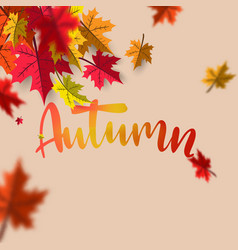 autumn sale background layout falling leaves with vector image