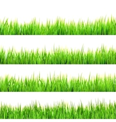 Green grass isolated on white EPS 10 vector image
