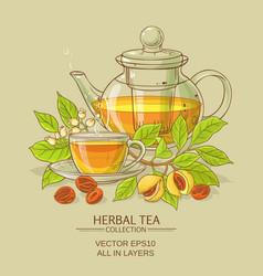 nutmeg tea vector image