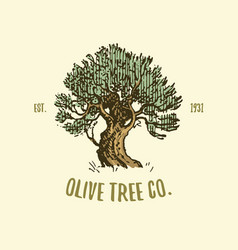 Olive tree logo engraved or hand drawn isolated vector
