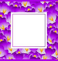 purple crocus flower banner card vector image