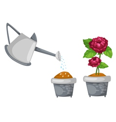 Watering can with rose cute in pot vector