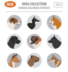 Working watching dog breeds set icon isolated on vector