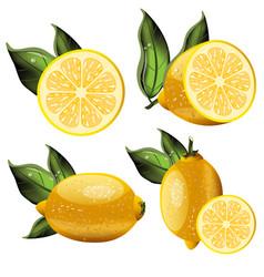 fresh lemon fruits collection vector image vector image