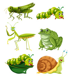 different types of insects in green color vector image vector image