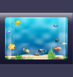 aquarium with exotic fish vector image