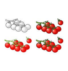 branch tomatoes engraved and flat vector image