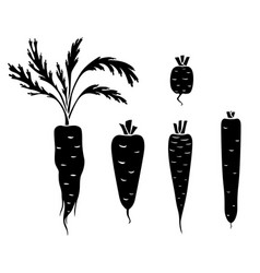 Carrots different varieties and shapes icon set vector