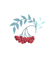 cranberry branch with red berries leaves vector image