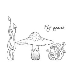 fly agaric non-edible poisonous forest mushrooms vector image