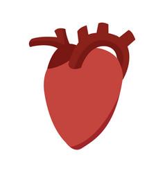 heart organ healthy care medical sport vector image