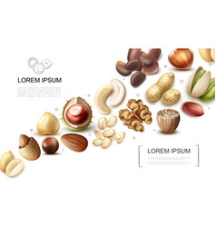 realistic organic nuts collection vector image