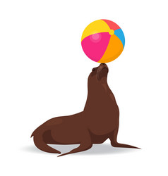 seal balancing colored ball on nose vector image