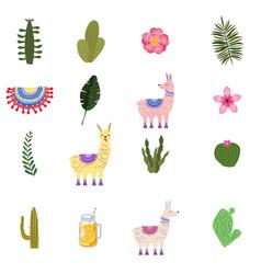 set lama alpaca cacti drinks and decorative vector image