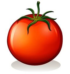A big ripe tomato vector
