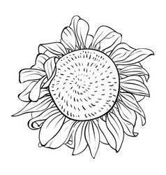 Adult coloring bookpage a cute flower image for vector
