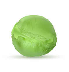 Cabbage head green realistic style vector