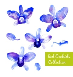 Collection of blue watercolor orchids vector