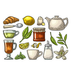 cup wit tea and branch with leaves vintage vector image