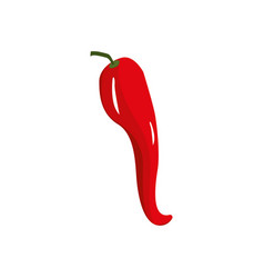 Fresh chilli pepper organ food vector