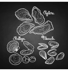 Graphic mussels oysters and scallops vector image