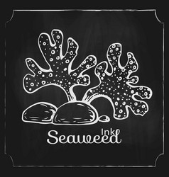 Hand drawn seaweed on black chalkboard vector