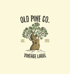 Pine tree logo engraved or hand drawn isolated vector